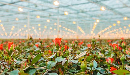 Corporate Forward: Blooming Success